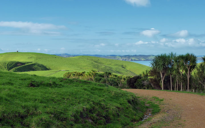 Dusty winding road on Motutapu Island near Auckland with grass covered rolling hills and a few palm trees in the background