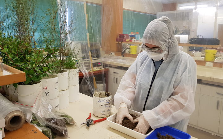 Native plants put under microscope for E coli and effluent