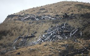 Tolaga Bay, heavy rain forced piles of wood onto farmland.