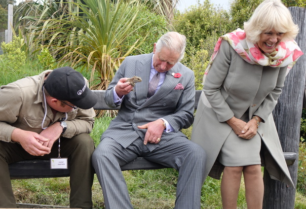 A bee landed on Prince Charles' leg while he was holding the tuatara in Dunedin.