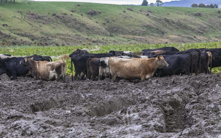 020818 Photo: Richard Cosgrove / Fish & Game NZ Southland Fish & Game field trip looking at winter grazing and break feeding practices