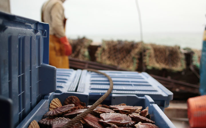 Scallops shell are seen onboard a fishing boat on December 18, 2014 off Port-en-Bessin, northwestern France.