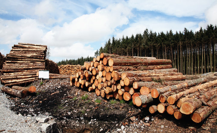 Logs stacked after an industry operation.