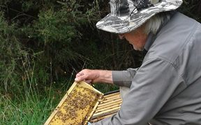 Westport beekeeper Gary Jeffery is urgently trying to raise money to keep his business running.