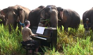 Pianist Paul Barton performs for elephants in Thailand