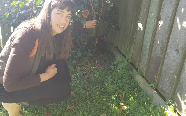 Hannah Mackintosh has seen an increase in native birds after setting up a trap in her backyard.