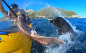 Film maker Taiyo Masuda captured the moment his friend Kyle Mulinder was slapped in the face by a seal.