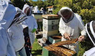 Members of the Wellington Beekeepers Association inspect one of the 800,000 hives registered in New Zealand.