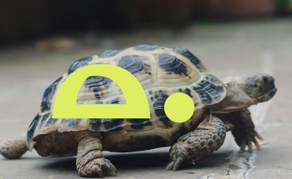 No hurry: Tortoise promises to slow down digital-age news.