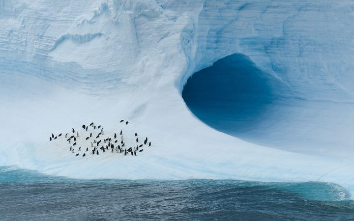Chinstrap penguins on an iceberg in the Antarctica Weddell Sea.