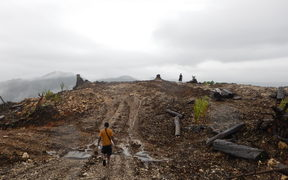 A logging area in Bairaman, East New Britain, PNG
