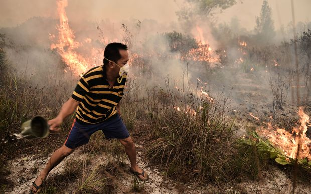 A villager tries to extinguish a peatland fire on the outskirts of Palangkaraya city, Central Kalimantan on October 26, 2015. For nearly two months, thousands of fires caused by slash-and-burn farming in Indonesia choked vast expanses of Southeast Asia.