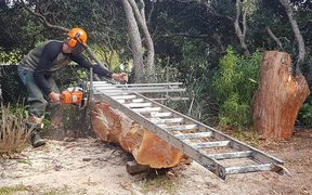 Carver Andy Mardell slabbing totara for a new creation