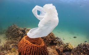 A torn plastic bag drifts over a tropical coral reef causing a hazard to marine life such as turtles.