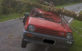Ryan Walsh survived after a tree fell on his car.