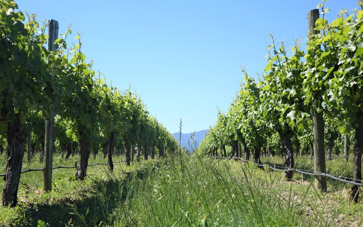 The group that represents Marlborough's vineyards and wineries are getting set for a return of the tourists, now that the main road past many of their front gates is back up and running.