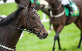 Thirty thoroughbred race horses were due to be flown to Hong Kong in July last year.