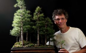 Nigel Saunders has become YouTube famous with his carefully curated collection of around 180 bonsai trees.