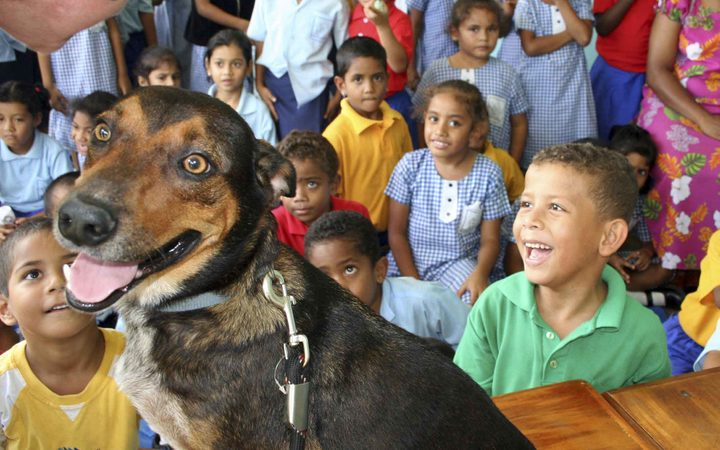 : Children at a primary school in Fiji learn about animal welfare, particularly stray dogs. Here the children are allowed to examine a dog as part of their lesson.