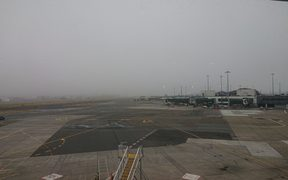 Fog at Wellington airport today, which has grounded flights until midday.