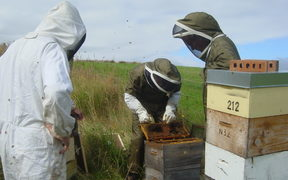 Inspecting bee colonies for AFB disease