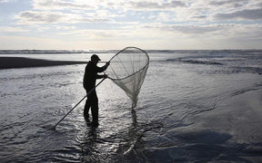A whitebaiter checks his scoop net at Mokau River mouth.