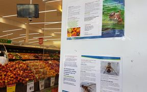 Sign in Devonport New World about the Queensland fruit fly