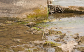 An example of algae clogging a river.