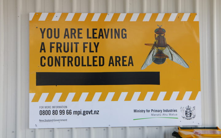 Two more foreign fruit flies found in Auckland | RNZ News