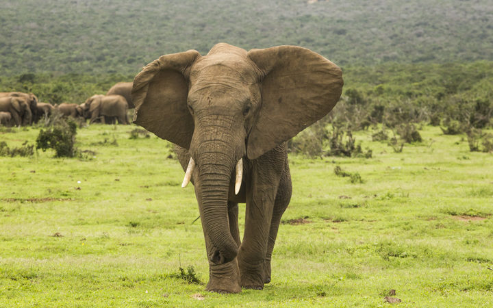 Botswana considers using elephant meat as pet food