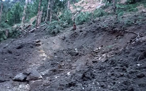 A view of damage caused to trees in hilly terrain after Indian air force dropped their payload in Balakot area, according to a Pakistan military spokesperson.