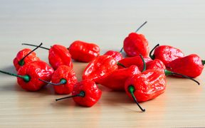 Bunch of Red Bhoot Jolokia Spicy ghost pepper isolated in wooden background with space for text
