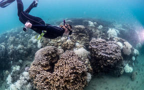 Researcher Rosemary Steinberg examines bleached coral on Lord Howe Is reef.