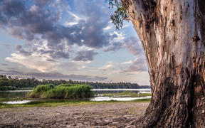 Barmah National Park - located on the Murray River near the town of Barmah, approximately 220 kilometres north of Melbourne. The 28,500 hectare park consists of River Red forest and wetlands