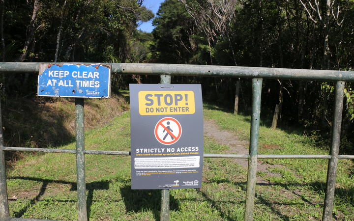 Councils blast MPs over lack of money for Kauri dieback