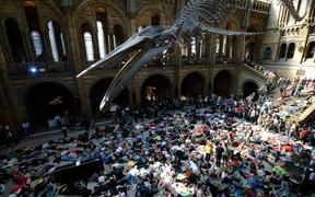 "Extinction Rebellion climate change activists perform a mass ""die in"" under the blue whale in the foyer of the Natural History Museum."