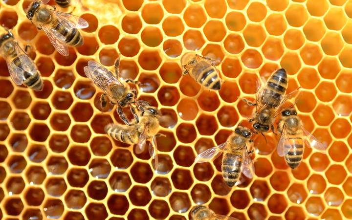 Damaged Wing Virus can add to a bee colony's troubles, particularly during a bad varroa mite infestation.