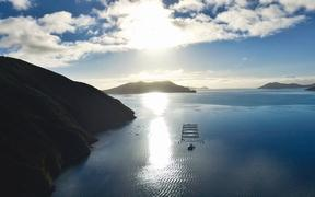 New Zealand King Salmon farm