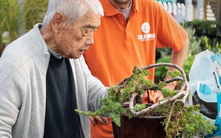 93-year-old devastated by theft of bonsai trees he tended to for over 40 years