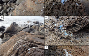'Plasticrust' found on rocks in Madiera