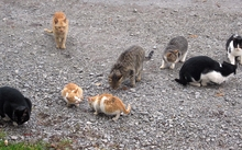 A colony of feral cats.