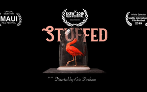 """Stuffed"" - a documentary showing at the New Zealand International Film Festival"