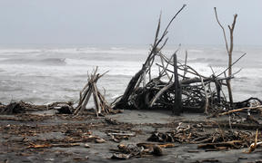 Driftwood washed up on the rough and stormy southern West Coast of New Zealand.