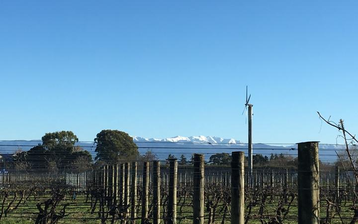 Fresh snow on the Tararuas behind a Martinborough vineyard