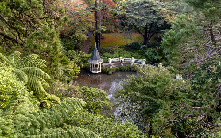 The Duck Pond at the Wellington Botanical garden, New Zealand