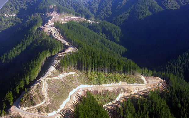 China Accused Of Unfair Play On Forestry Rnz News