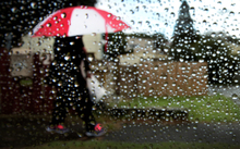 Bad weather in Auckland. Woman walks with an umbrella under the rain