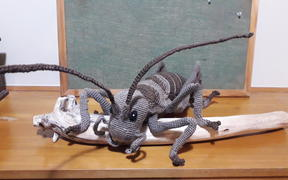 The winning Knit a Critter - Claire Kreavell's Giant Weta