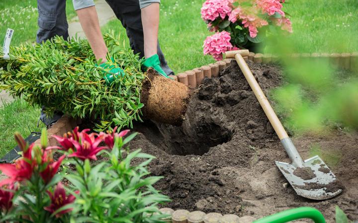 Gardener at work.