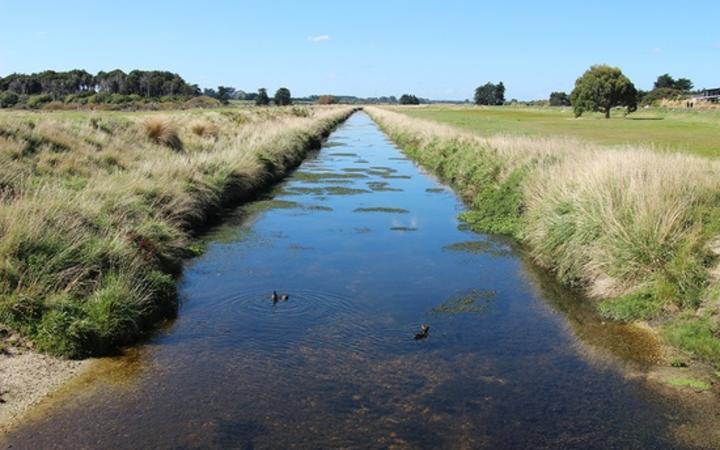 Health warning after livestock droppings found in Southland rivers